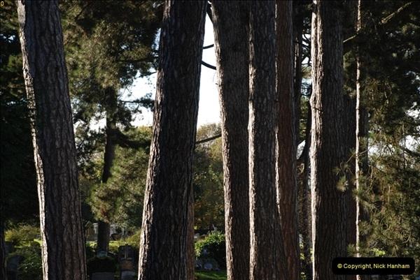 TREES (37)296