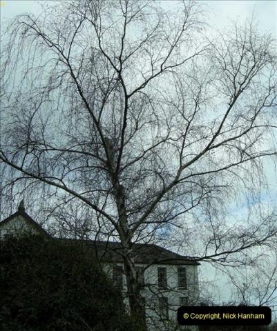 TREES (5)264