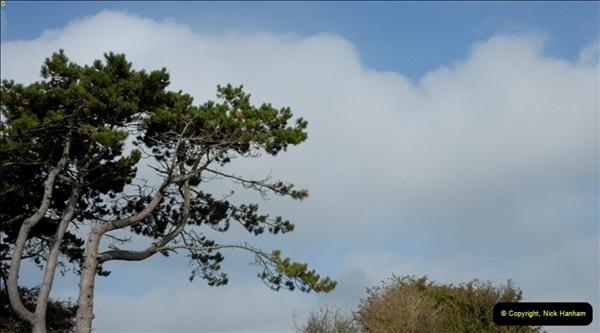 TREES (8)267