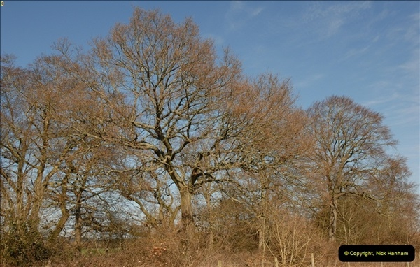 TREES (9)268