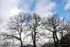 2013-03-16 Broadstone, Dorset.  (9)016