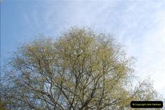 2013-04-25 Beaulieu, Hampshire.  (1)018