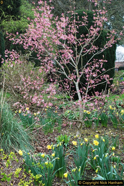 2017-03-24 Hinton Ampner NT property, Hampshire.  (81)083