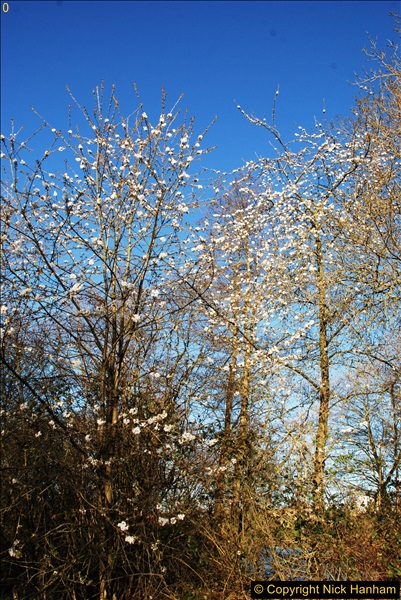 2017-03-25 On the Grand Union Canal near Uxbridge, Middlesex.  (177)339