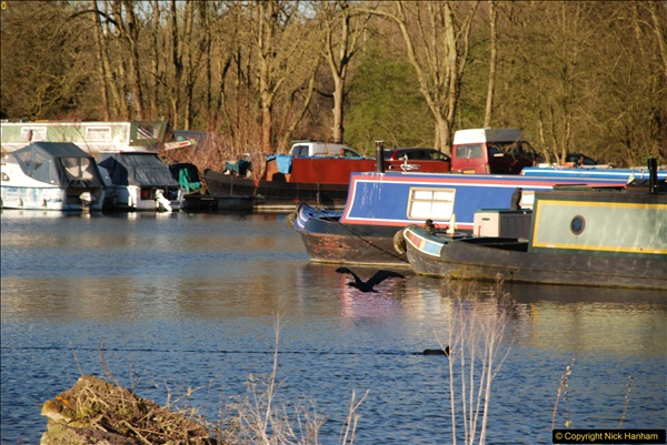 2017-03-25 On the Grand Union Canal near Uxbridge, Middlesex.  (181)343