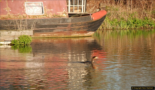 2017-03-25 On the Grand Union Canal near Uxbridge, Middlesex.  (193)355