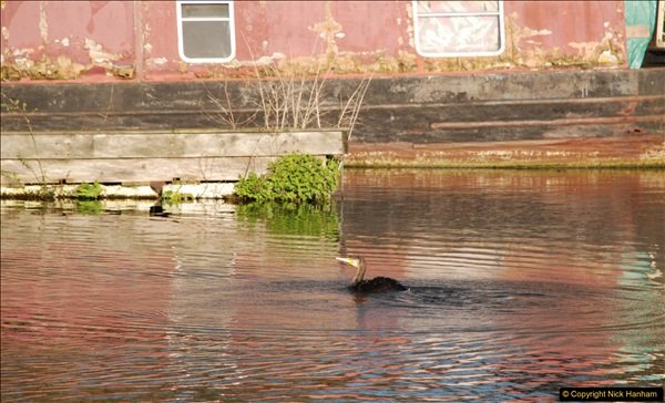 2017-03-25 On the Grand Union Canal near Uxbridge, Middlesex.  (194)356