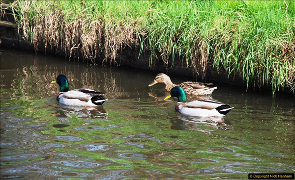 2017-03-25 On the Grand Union Canal near Uxbridge, Middlesex.  (84)246
