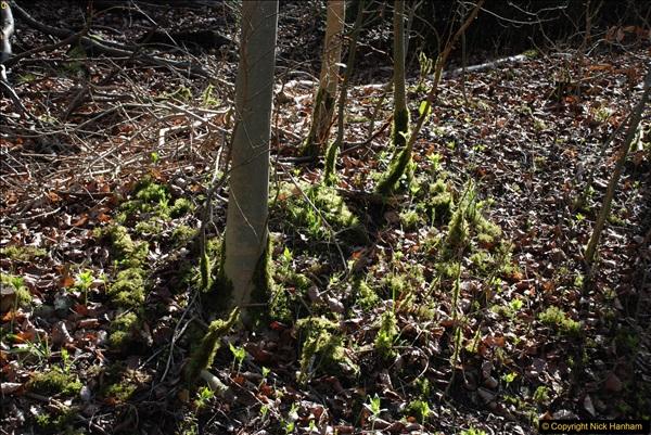 2017-03-26 Wendover Woods, Wendover, Buckinghamshire.  (24)373