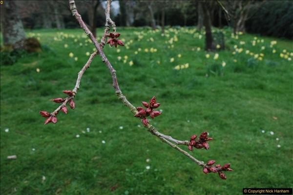 2017-03-24 Hinton Ampner NT property, Hampshire.  (56)058