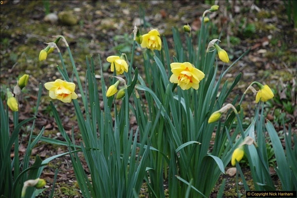 2017-03-24 Hinton Ampner NT property, Hampshire.  (82)084