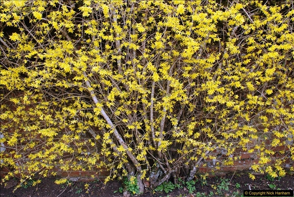 2017-03-24 Hinton Ampner NT property, Hampshire.  (96)098