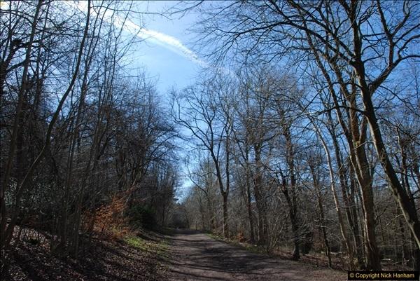 2017-03-26 Wendover Woods, Wendover, Buckinghamshire.  (23)372