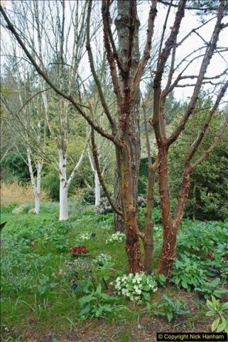 2018-04-22 RHS Rosemoor Gardens, Great Torrington, Devon.   (26)026