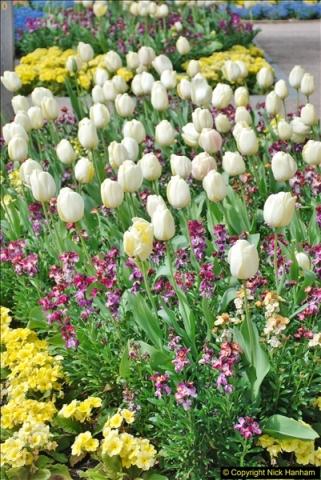2018-04-22 RHS Rosemoor Gardens, Great Torrington, Devon.   (3)003
