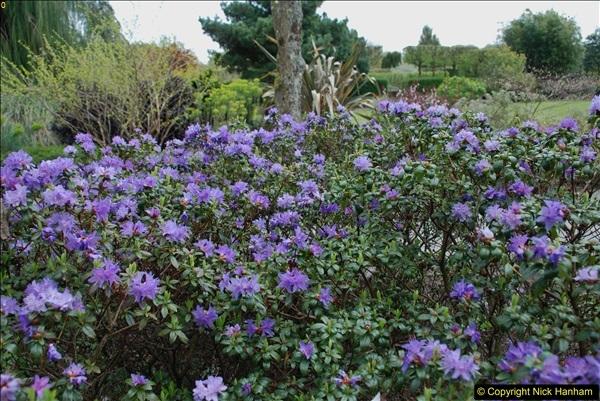 2018-04-22 RHS Rosemoor Gardens, Great Torrington, Devon.   (34)034