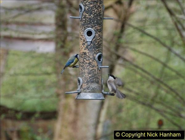 2018-04-22 RHS Rosemoor Gardens, Great Torrington, Devon.   (37)037