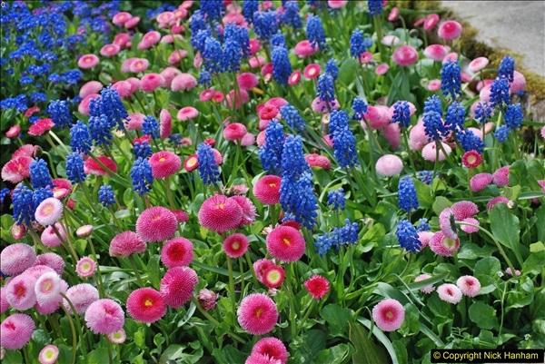 2018-04-22 RHS Rosemoor Gardens, Great Torrington, Devon.   (5)005