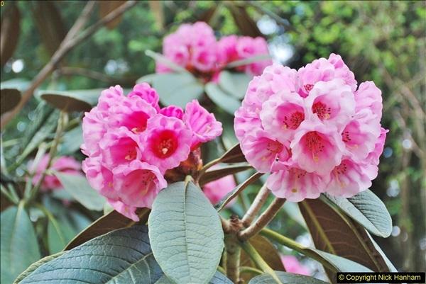 2018-04-22 RHS Rosemoor Gardens, Great Torrington, Devon.   (59)059