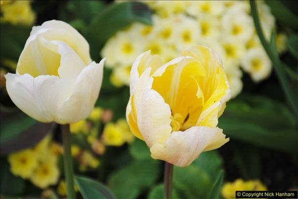 2018-04-22 RHS Rosemoor Gardens, Great Torrington, Devon.   (6)006