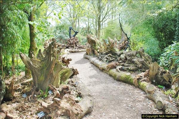2018-04-22 RHS Rosemoor Gardens, Great Torrington, Devon.   (61)061
