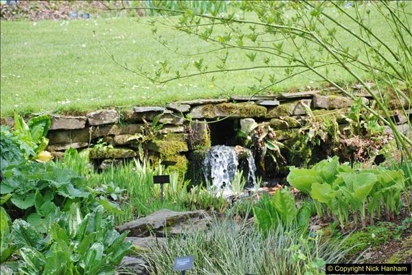 2018-04-22 RHS Rosemoor Gardens, Great Torrington, Devon.   (67)067