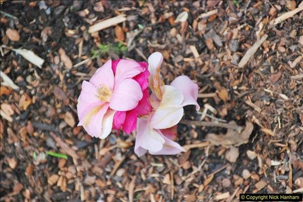 2018-04-22 RHS Rosemoor Gardens, Great Torrington, Devon.   (84)084