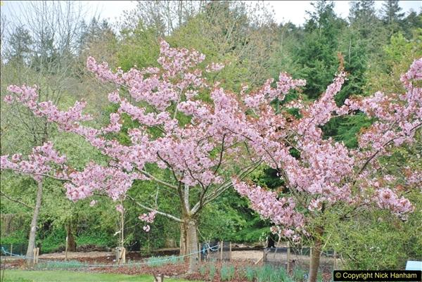 2018-04-22 RHS Rosemoor Gardens, Great Torrington, Devon.   (85)085