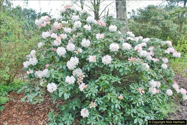 2018-04-22 RHS Rosemoor Gardens, Great Torrington, Devon.   (86)086