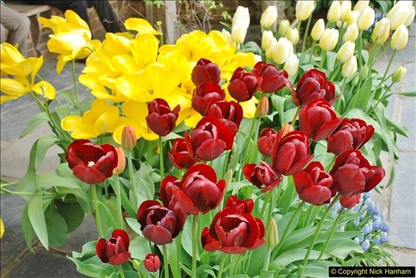 2018-04-22 RHS Rosemoor Gardens, Great Torrington, Devon.   (90)090