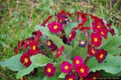 2018-04-22 RHS Rosemoor Gardens, Great Torrington, Devon.   (27)027