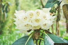 2018-04-22 RHS Rosemoor Gardens, Great Torrington, Devon.   (60)060